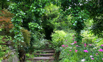 El Jardín Botánico de Santa Catalina amplía su apertura a todos los días de la semana