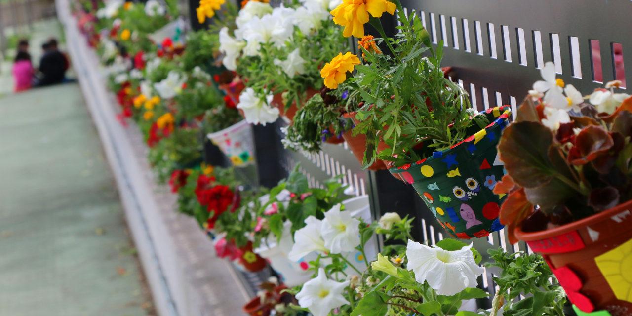 Un Jardín Vertical culmina la Semana Verde en el colegio José Miguel de Barandiaran